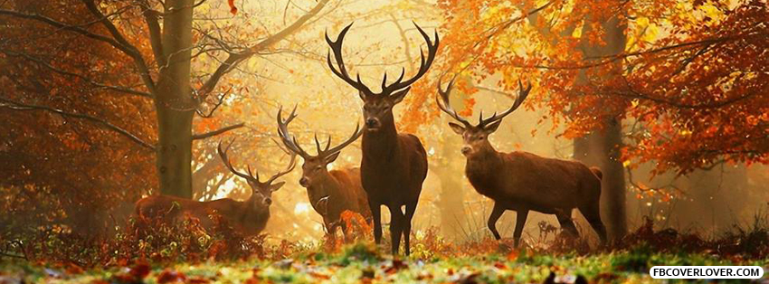 Autumn Forest Deer Facebook Covers More seasonal Covers for Timeline