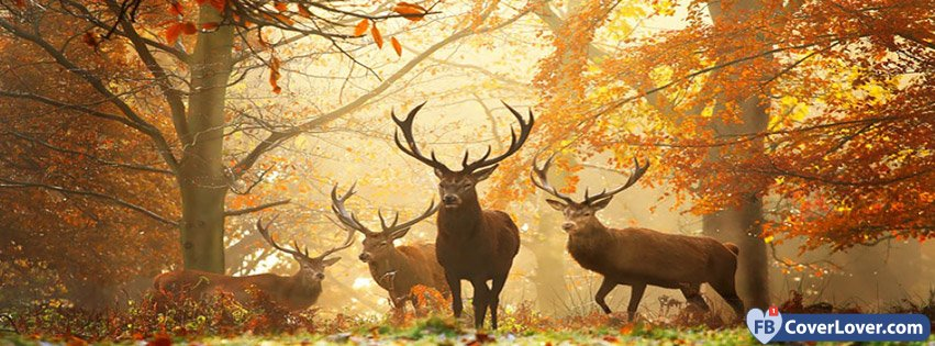 Autumn Forest Deers