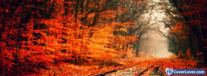 Autumn Forest And Rails