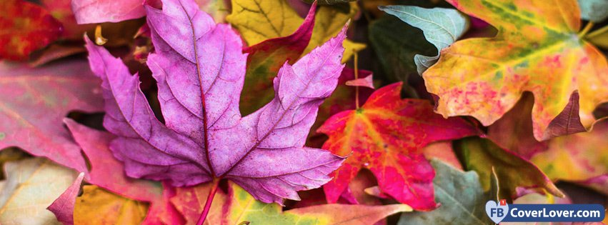 Pink Autumn Facebook Cover