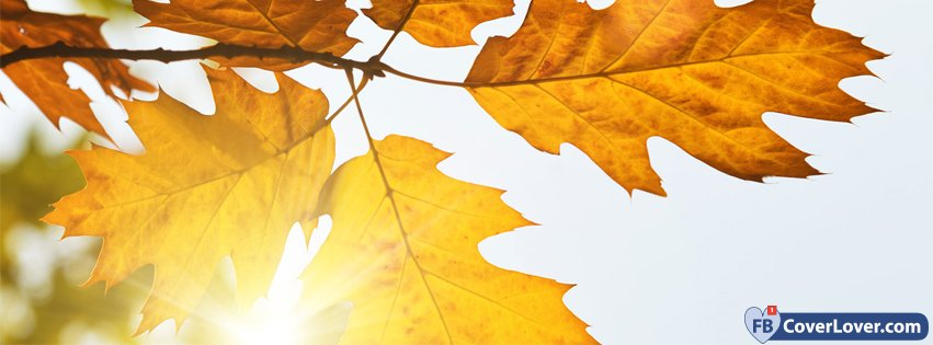 Autumn Leaves Sunshine