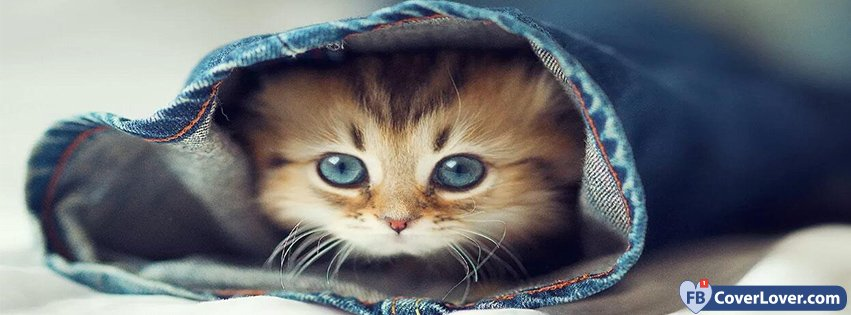 Cat Hiding In A Pair Of Jeans