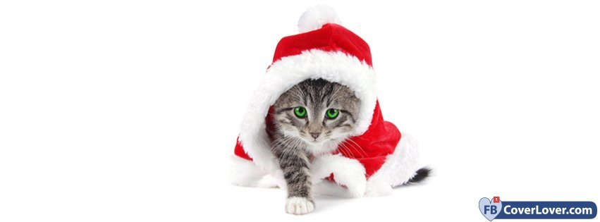 Christmas Cat Disguised