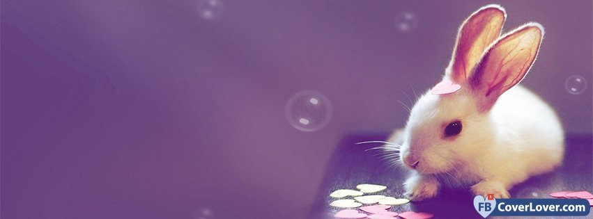 cute bunny with hearts facebook cover maker fbcoverlover com
