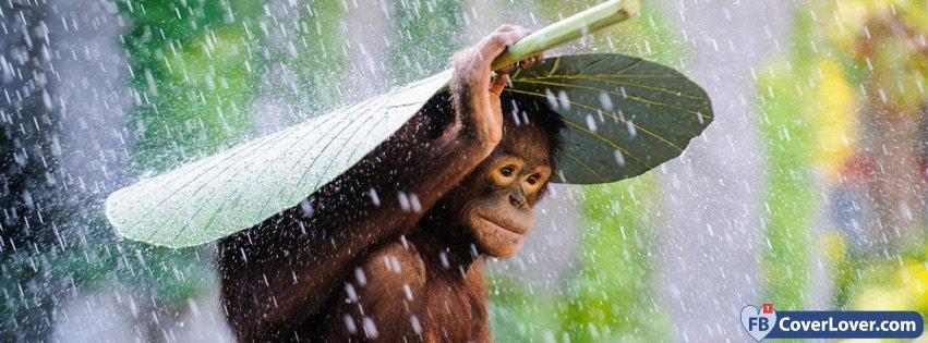 Cute Monkey Under The Rain