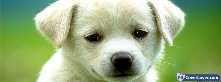 Cute Puppy Look