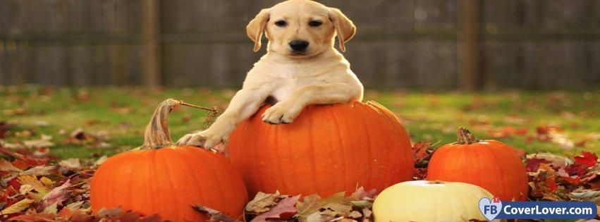 Dog Posing On Pumpkins