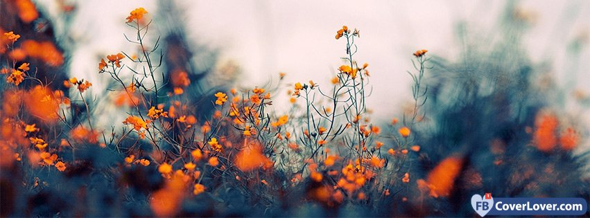 Orange Flowers Nature And Landscape Facebook Covers Photo