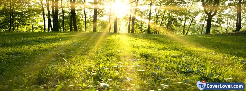 Forest Spring Sunrise