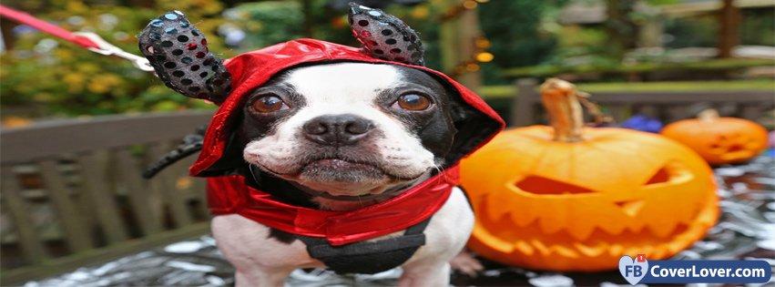 Halloween Dog In Costume