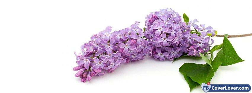 Lilac Tree Branch