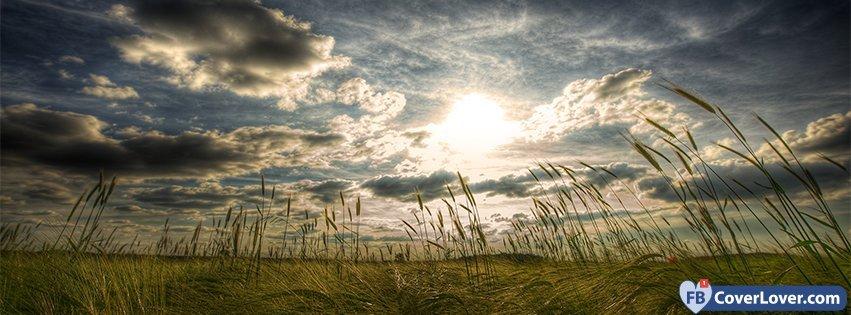 Herbs And Sun