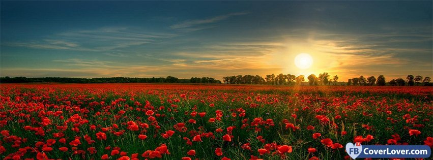 poppies flowers field flowers facebook cover maker