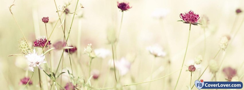 Choose Other Similar Facebook Cover Pink Flower Water Droplets