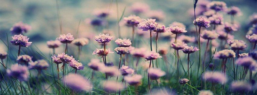 """Képtalálat a következőre: """"flower facebook cover"""""""