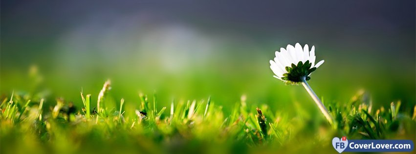 Spring Flower Flowers Facebook Cover Maker Fbcoverlover Com
