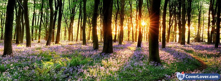 Spring Forest Sunset seasonal Facebook Cover - photo#13