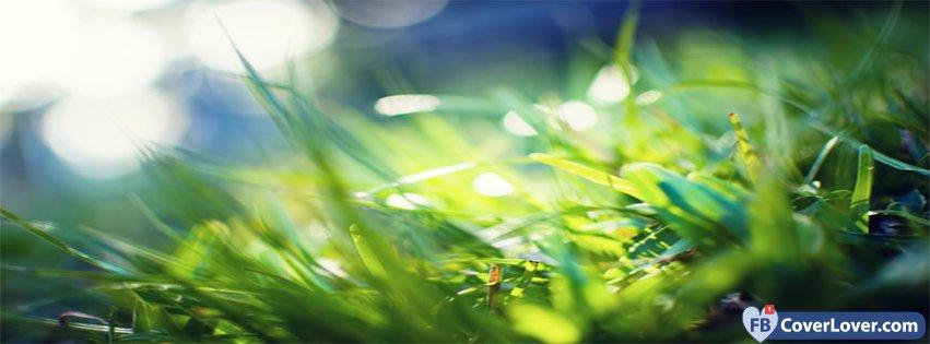 Spring Macro Green Grass