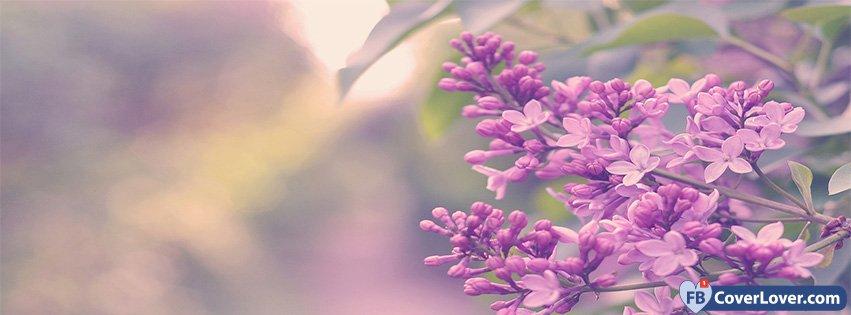 Spring Magic Lilac