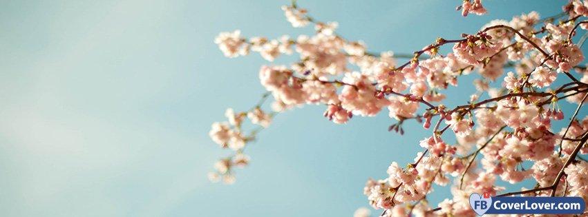 Spring Sakura Spring