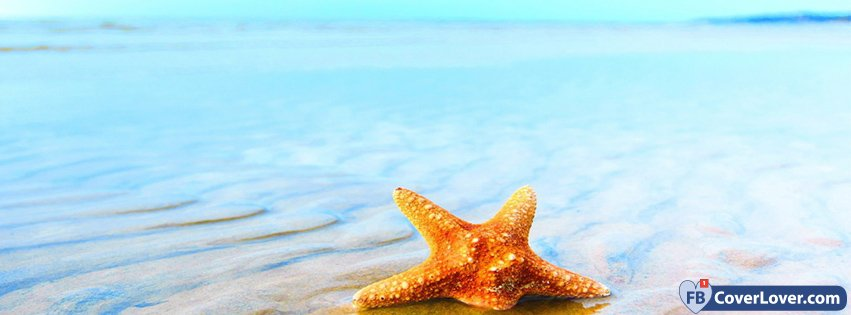 Summer Starfish