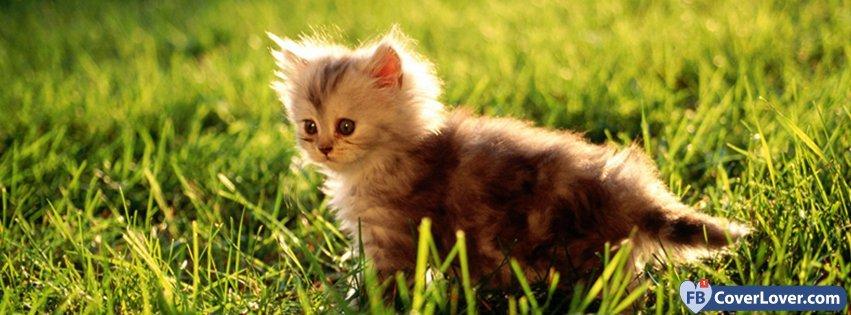 Cute Kitty 2