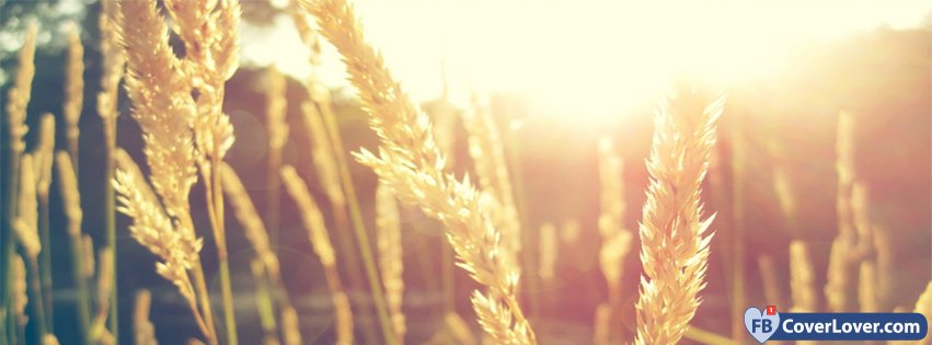 Nature Sun Wheat Nature And Landscape Facebook Covers Photo