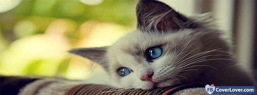 Sad Cat Animals Facebook Cover Maker Fbcoverlover Com