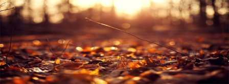 Autumn Forest 2 Facebook Covers
