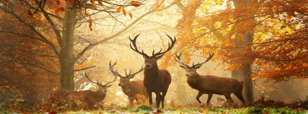 Autumn Forest Deers Facebook Covers