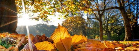 Autumn Forest Facebook Covers
