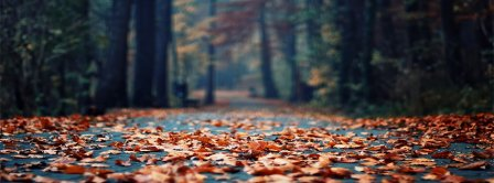 Autumn Forest Leaves Facebook Covers