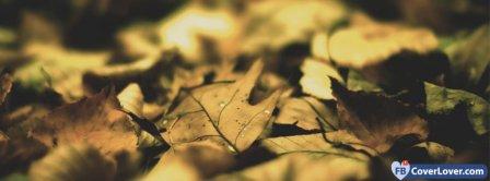Autumn Leaves Seasonal Facebook Covers