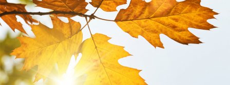 Autumn Leaves Sunshine Facebook Covers