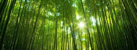 Bamboo Forest Facebook Covers