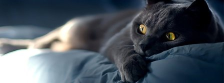 Beautiful Black Cat Facebook Covers Fbcoverlover Facebook Covers
