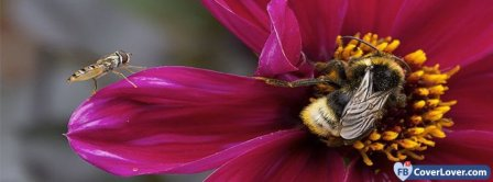 Bees On A Flower Facebook Covers