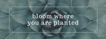 Bloom Where You Are Planted Facebook Covers
