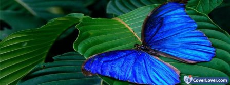 Blue Butterfly Facebook Covers