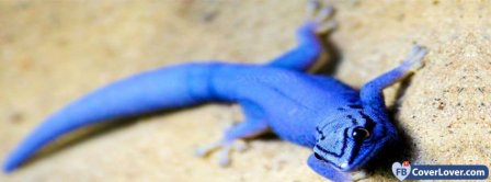 Blue Lizard Facebook Covers