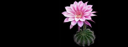 Cactus Flower Facebook Covers