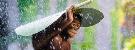 Cute Monkey Under The Rain Facebook Covers