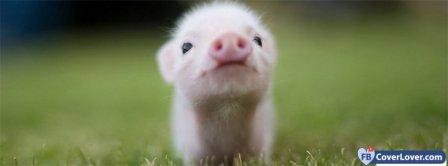 Cute Piglet 2 Facebook Covers
