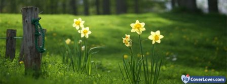 Daffodil Flowers  Facebook Covers
