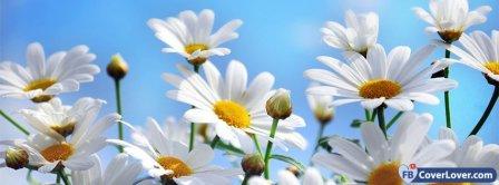 Daisies Flowers 2  Facebook Covers
