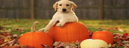 Dog Posing On Pumpkins Facebook Covers