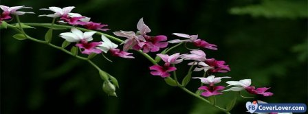 Rampant Flowers Facebook Covers