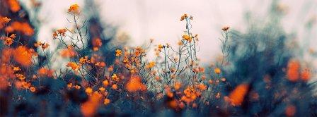 Orange Flowers Facebook Covers