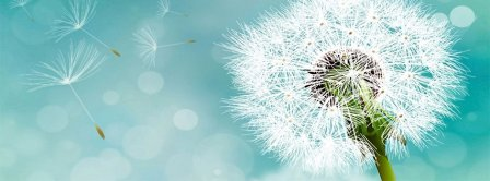 Flying Dandelion Facebook Covers