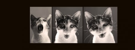 Funny Cat Series Of Photos Facebook Covers